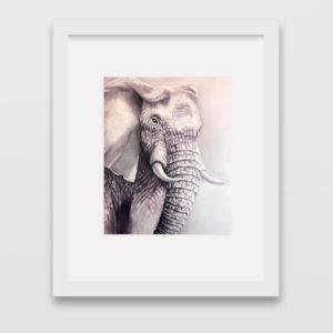 elephantwhite